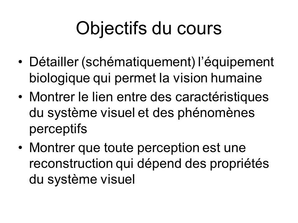 Objectifs du cours Détailler (schématiquement) léquipement biologique qui permet la vision humaine Montrer le lien entre des caractéristiques du systè