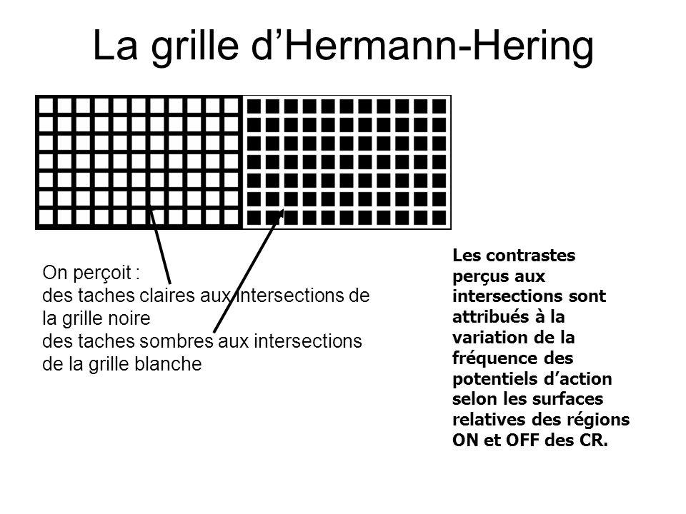 La grille dHermann-Hering Les contrastes perçus aux intersections sont attribués à la variation de la fréquence des potentiels daction selon les surfaces relatives des régions ON et OFF des CR.