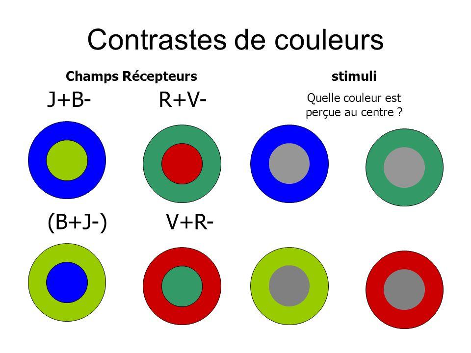 Contrastes de couleurs J+B- (B+J-) R+V- V+R- Champs Récepteursstimuli Quelle couleur est perçue au centre ?