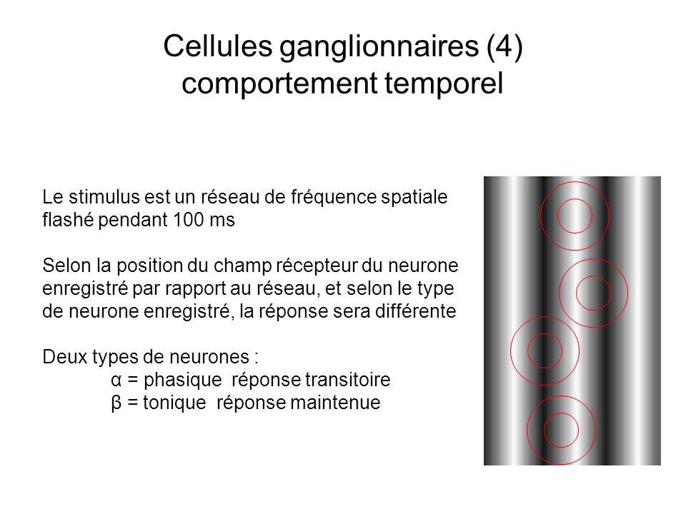 Cellules ganglionnaires (4) comportement temporel Le stimulus est un réseau de fréquence spatiale flashé pendant 100 ms Selon la position du champ récepteur du neurone enregistré par rapport au réseau, et selon le type de neurone enregistré, la réponse sera différente Deux types de neurones : α = phasique réponse transitoire β = tonique réponse maintenue