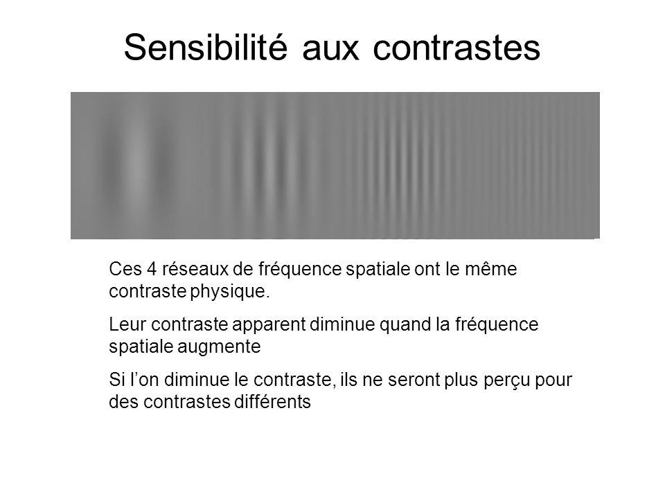 Sensibilité aux contrastes Ces 4 réseaux de fréquence spatiale ont le même contraste physique. Leur contraste apparent diminue quand la fréquence spat