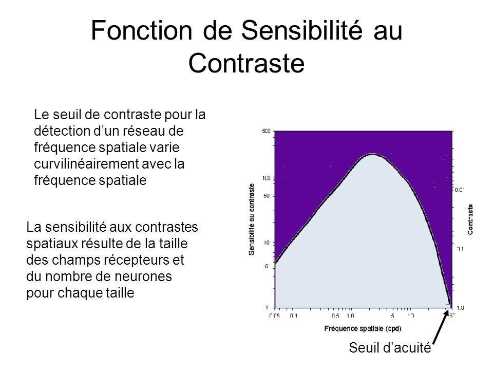 Fonction de Sensibilité au Contraste Le seuil de contraste pour la détection dun réseau de fréquence spatiale varie curvilinéairement avec la fréquence spatiale La sensibilité aux contrastes spatiaux résulte de la taille des champs récepteurs et du nombre de neurones pour chaque taille Seuil dacuité