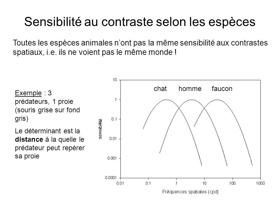 Sensibilité au contraste selon les espèces chat homme faucon Toutes les espèces animales nont pas la même sensibilité aux contrastes spatiaux, i.e. il