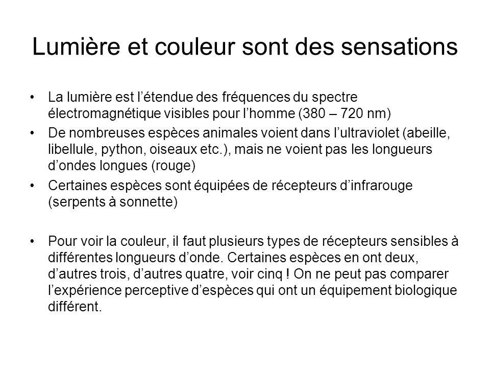 Lumière et couleur sont des sensations La lumière est létendue des fréquences du spectre électromagnétique visibles pour lhomme (380 – 720 nm) De nombreuses espèces animales voient dans lultraviolet (abeille, libellule, python, oiseaux etc.), mais ne voient pas les longueurs dondes longues (rouge) Certaines espèces sont équipées de récepteurs dinfrarouge (serpents à sonnette) Pour voir la couleur, il faut plusieurs types de récepteurs sensibles à différentes longueurs donde.