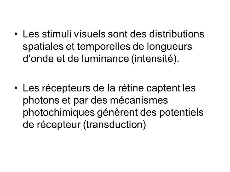 Les stimuli visuels sont des distributions spatiales et temporelles de longueurs donde et de luminance (intensité). Les récepteurs de la rétine capten
