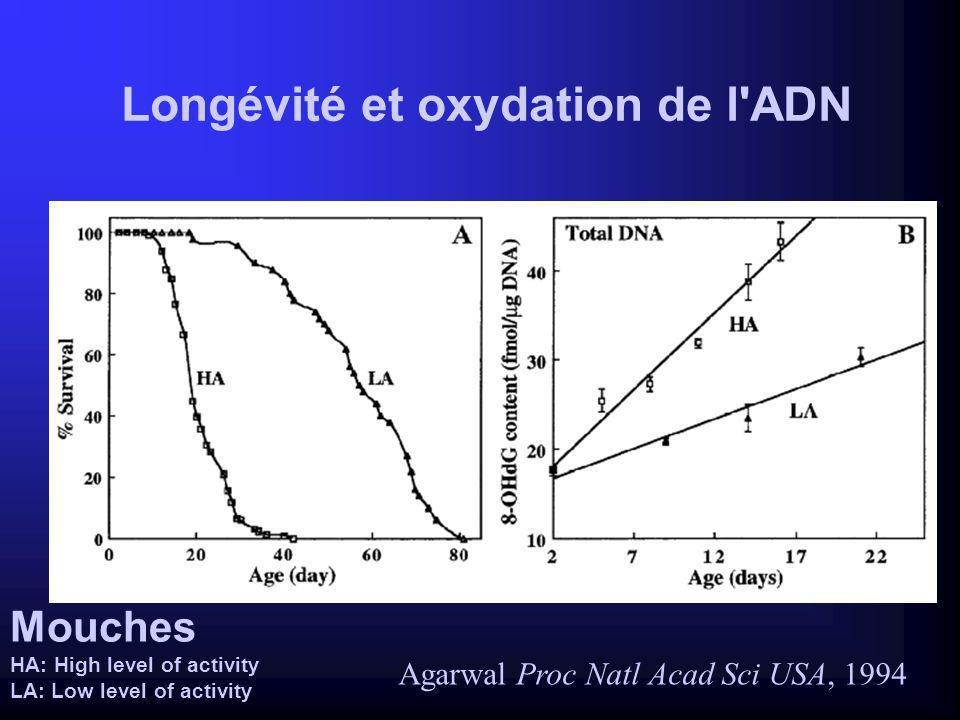 NASH et mitochondries Accumulation dacides gras libres dans le foie stéatose - soit inhibition de la b-oxydation - soit afflux AGL Si augmentation des ROS dans le même temps stéato-hépatite - peroxydation lipidique = fibrose - apoptose - cytokines = nécrose Quand altération mitochondriale - inhibition de la b-oxydation - augmentation des ROS