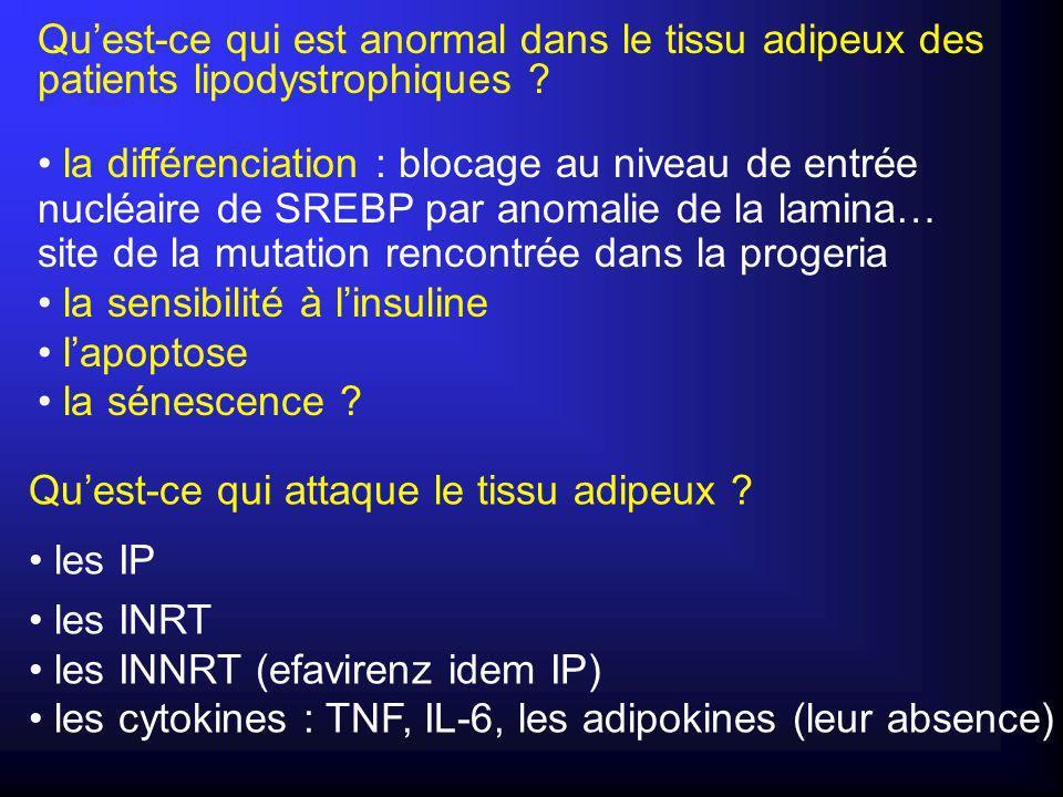 La diminution du taux dADNmt est compensée par laugmentation de nombre de mitochondries La diminution du taux dADNmt est compensée par laugmentation de nombre de mitochondries * Pas daltération fonctionnelle de la chaîne respiratoire sur le plan énergétique Augmentation du stress oxydant augmentation de lexpression dUCP2 augmentation de lexpression de CHOP-10 * * lactivité de la cytochrome c oxydase est normale lactivité de la cytochrome c oxydase est normale