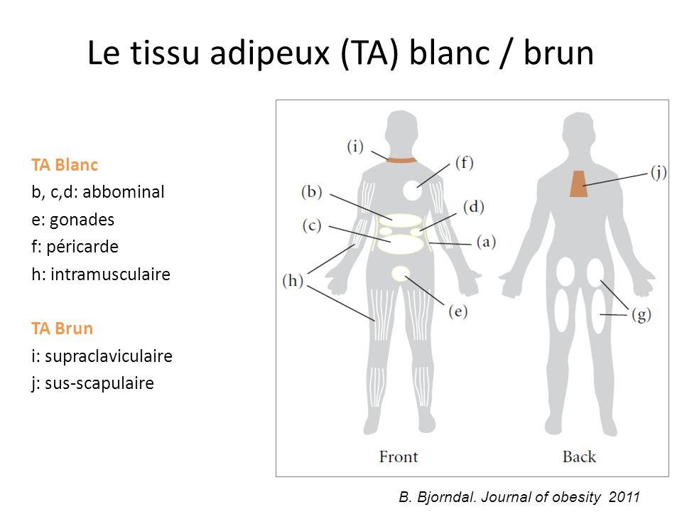 Le tissu adipeux (TA) blanc / brun TA Blanc b, c,d: abbominal e: gonades f: péricarde h: intramusculaire TA Brun i: supraclaviculaire j: sus-scapulair