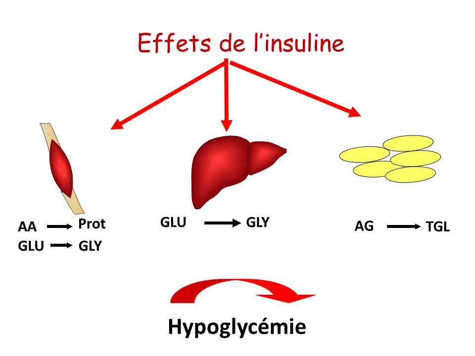 GLUGLY GLU TGL AG Hypoglycémie GLY AA Prot Effets de linsuline