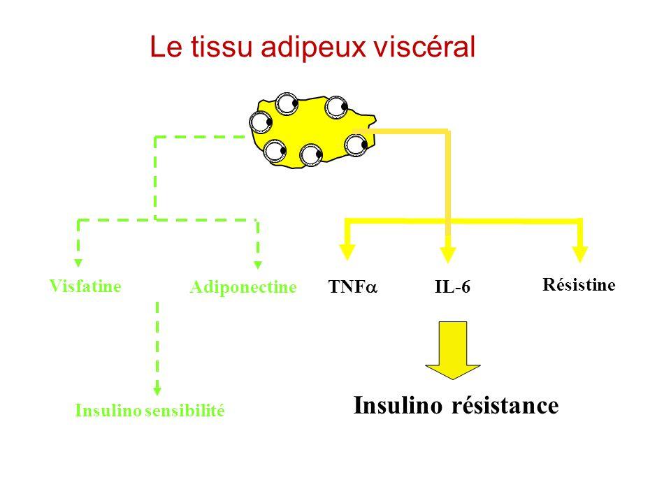 Le tissu adipeux viscéral Insulino résistance Résistine TNF IL-6Adiponectine Visfatine Insulino sensibilité