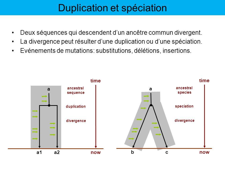 Deux séquences qui descendent dun ancêtre commun divergent. La divergence peut résulter dune duplication ou dune spéciation. Evénements de mutations:
