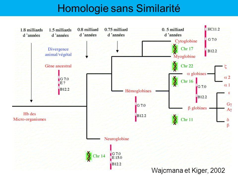 Wajcmana et Kiger, 2002 Homologie sans Similarité