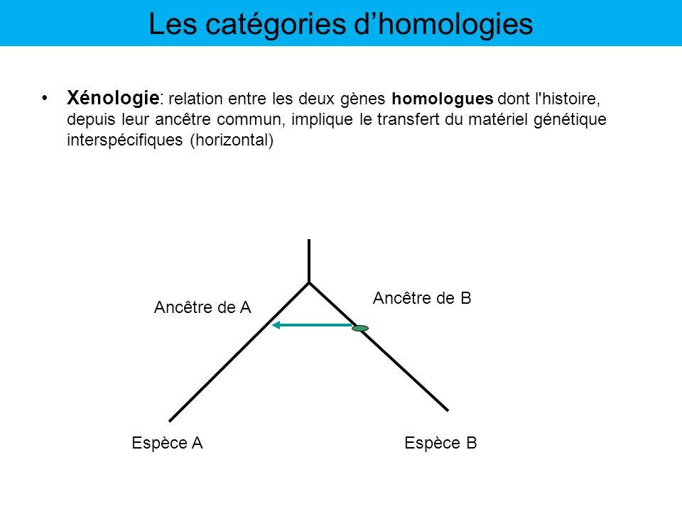 Xénologie: relation entre les deux gènes homologues dont l'histoire, depuis leur ancêtre commun, implique le transfert du matériel génétique interspéc