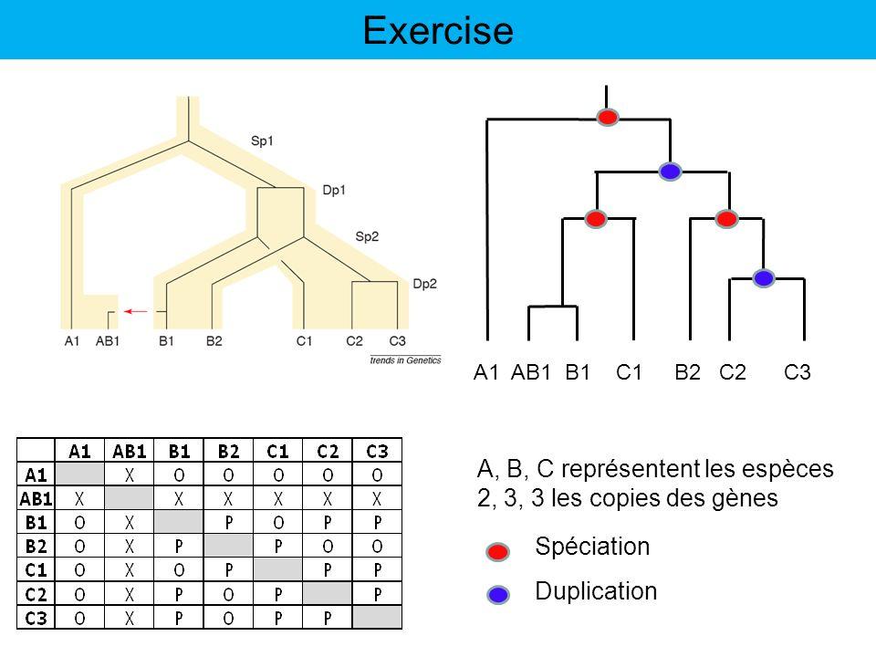 Exercise A1 AB1 B1 C1 B2 C2 C3 A, B, C représentent les espèces 2, 3, 3 les copies des gènes Spéciation Duplication