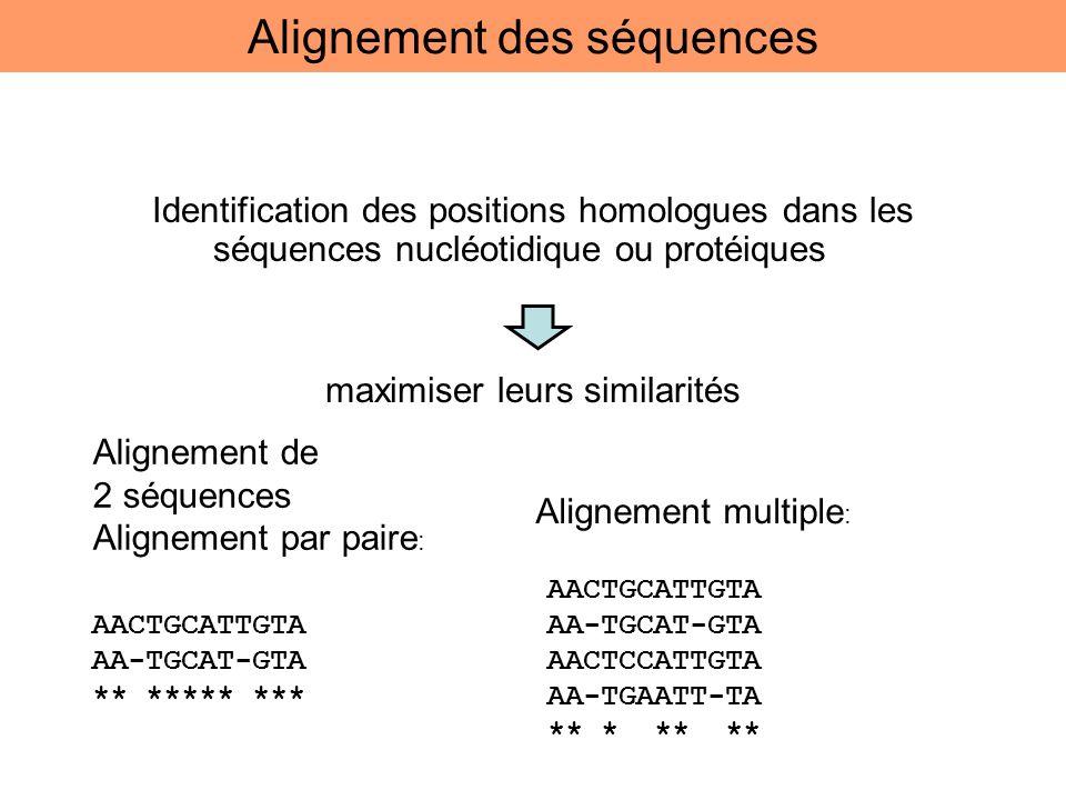 Identification des positions homologues dans les séquences nucléotidique ou protéiques maximiser leurs similarités AACTGCATTGTA AA-TGCAT-GTA ** *****