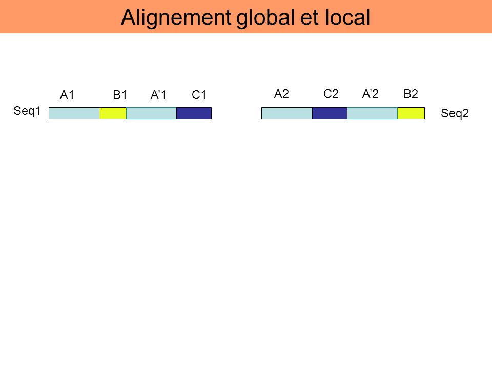 A1 B1 A1 C1 A2 C2 A2 B2 Seq1 Seq2 Alignement global et local