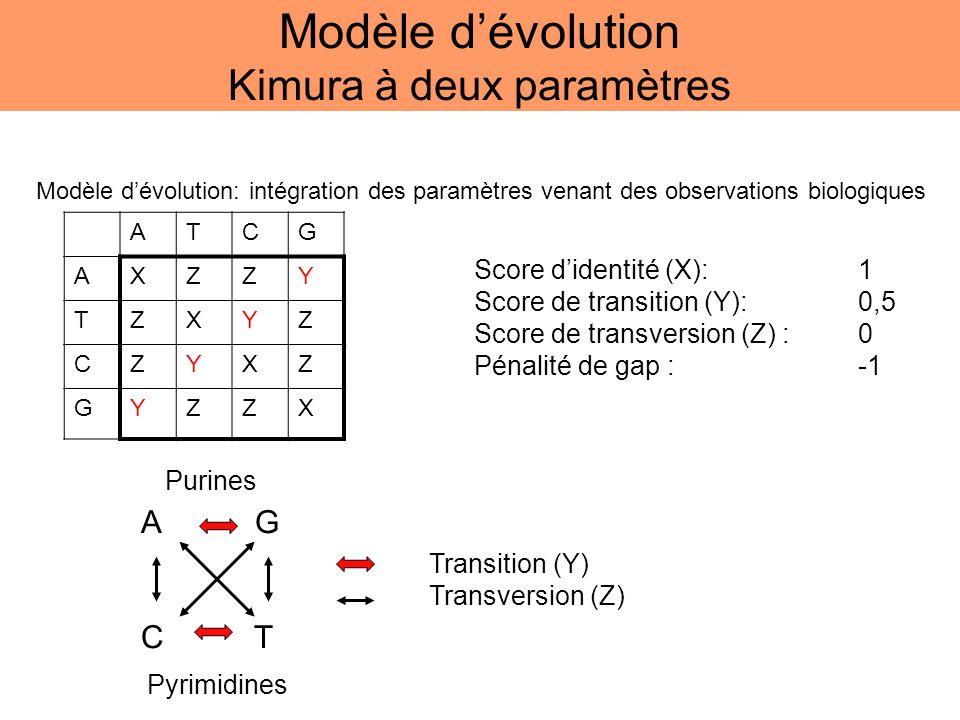 A G C T ATCG AXZZY TZXYZ CZYXZ GYZZX Score didentité (X):1 Score de transition (Y):0,5 Score de transversion (Z) :0 Pénalité de gap : -1 Modèle dévolu