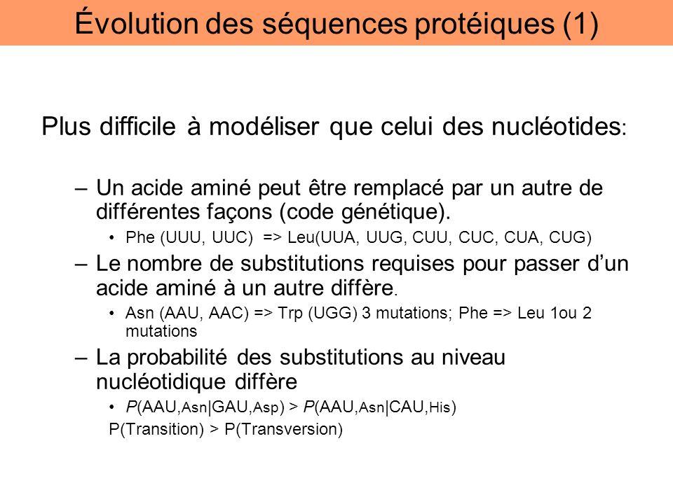 Plus difficile à modéliser que celui des nucléotides : –Un acide aminé peut être remplacé par un autre de différentes façons (code génétique). Phe (UU