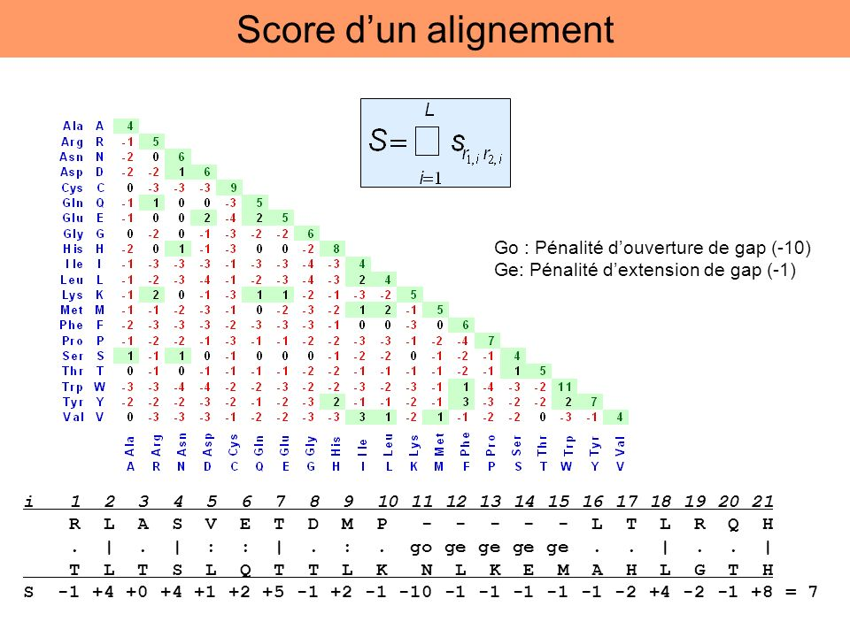 Score dun alignement i 1 2 3 4 5 6 7 8 9 10 11 12 13 14 15 16 17 18 19 20 21 R L A S V E T D M P - - - - - L T L R Q H. |. | : : |. :. go ge ge ge ge.