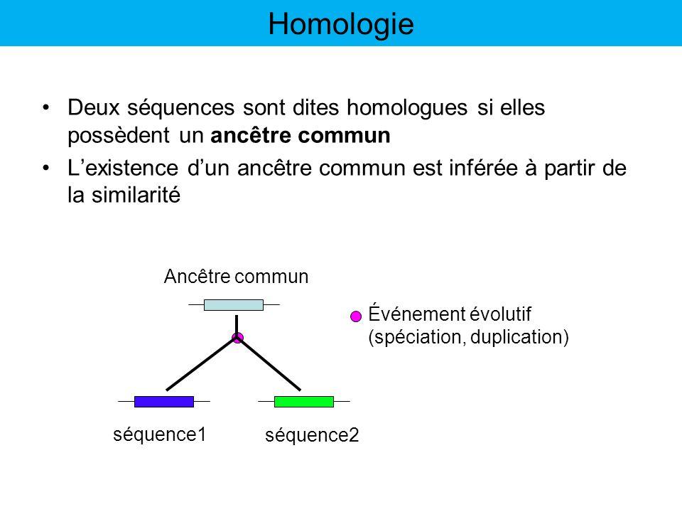 Paralogie: paire de gènes homologues dont le dernier ancêtre commun a eu lieu immédiatement avant un événement de duplication génique Les fonctions dun ou de plusieurs paralogues peuvent changer au cours de lévolution (spécialisation, nouvelle fonction) B et C sont paralogues A et C, A et B sont orthologues SeqA SeqB SeqC Insuline Insuline I Insuline II Chat Souris Spéciation Duplication Les catégories dhomologies