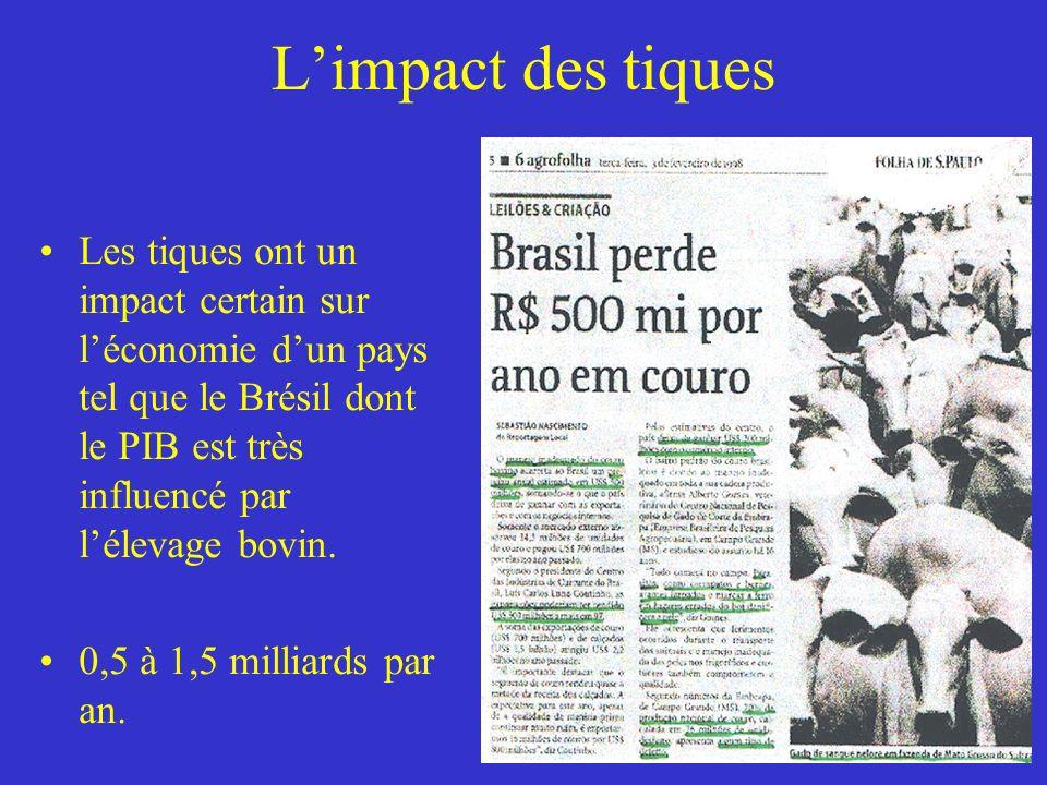 Limpact des tiques Les tiques ont un impact certain sur léconomie dun pays tel que le Brésil dont le PIB est très influencé par lélevage bovin.