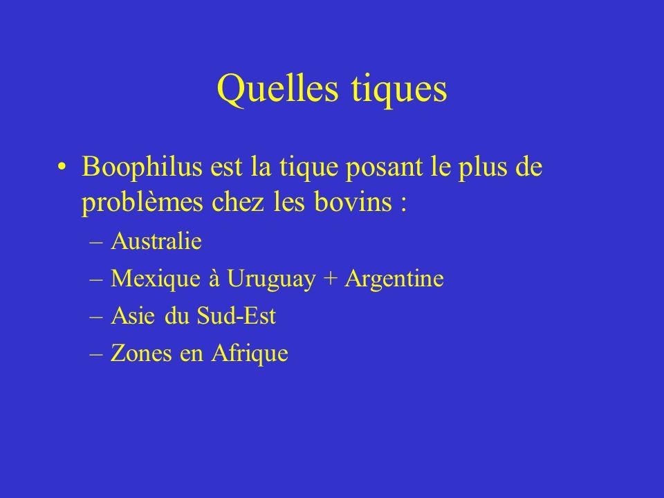 Quelles tiques Boophilus est la tique posant le plus de problèmes chez les bovins : –Australie –Mexique à Uruguay + Argentine –Asie du Sud-Est –Zones en Afrique