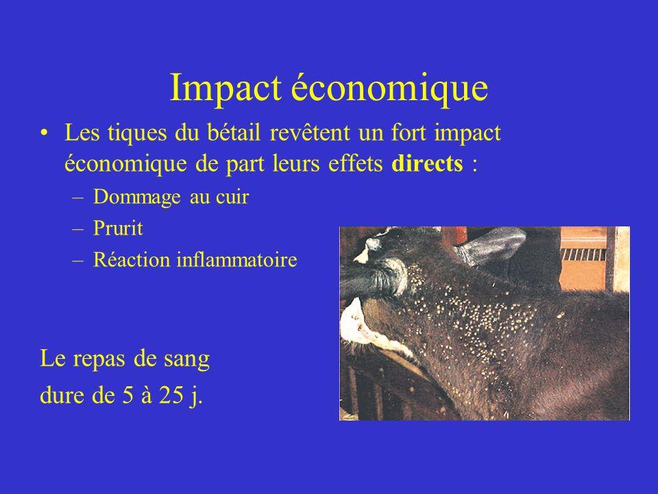 Impact économique Les tiques du bétail revêtent un fort impact économique de part leurs effets directs : –Dommage au cuir –Prurit –Réaction inflammatoire Le repas de sang dure de 5 à 25 j.