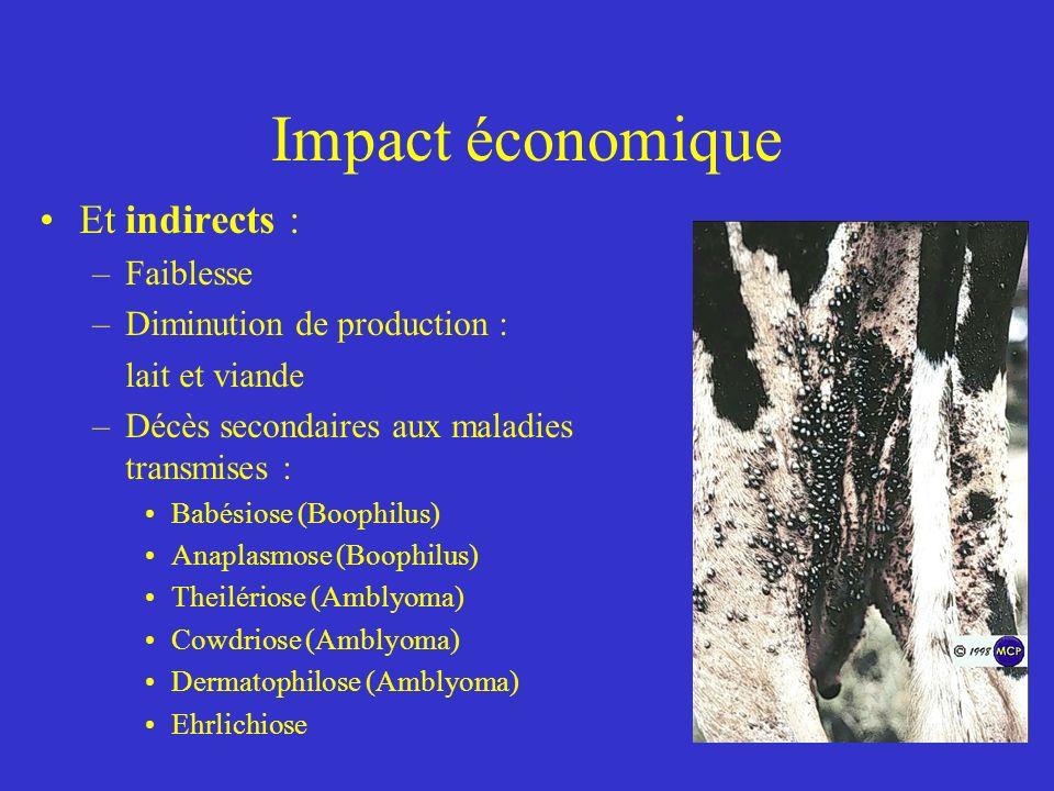 Impact économique Et indirects : –Faiblesse –Diminution de production : lait et viande –Décès secondaires aux maladies transmises : Babésiose (Boophilus) Anaplasmose (Boophilus) Theilériose (Amblyoma) Cowdriose (Amblyoma) Dermatophilose (Amblyoma) Ehrlichiose