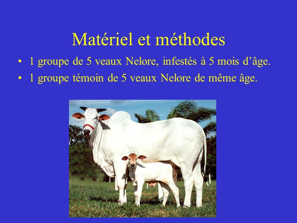 Matériel et méthodes 1 groupe de 5 veaux Nelore, infestés à 5 mois dâge.