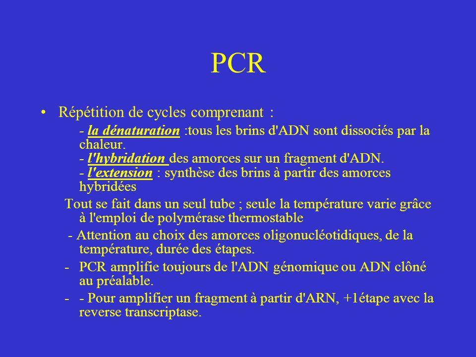 PCR Répétition de cycles comprenant : - la dénaturation :tous les brins d ADN sont dissociés par la chaleur.
