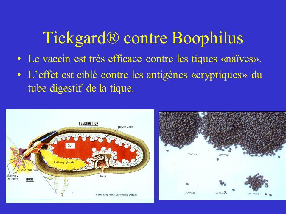 Tickgard® contre Boophilus Le vaccin est très efficace contre les tiques «naïves».