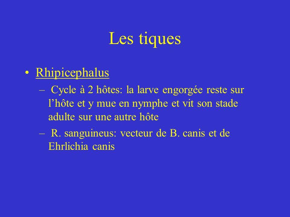 Les tiques Rhipicephalus – Cycle à 2 hôtes: la larve engorgée reste sur lhôte et y mue en nymphe et vit son stade adulte sur une autre hôte – R.