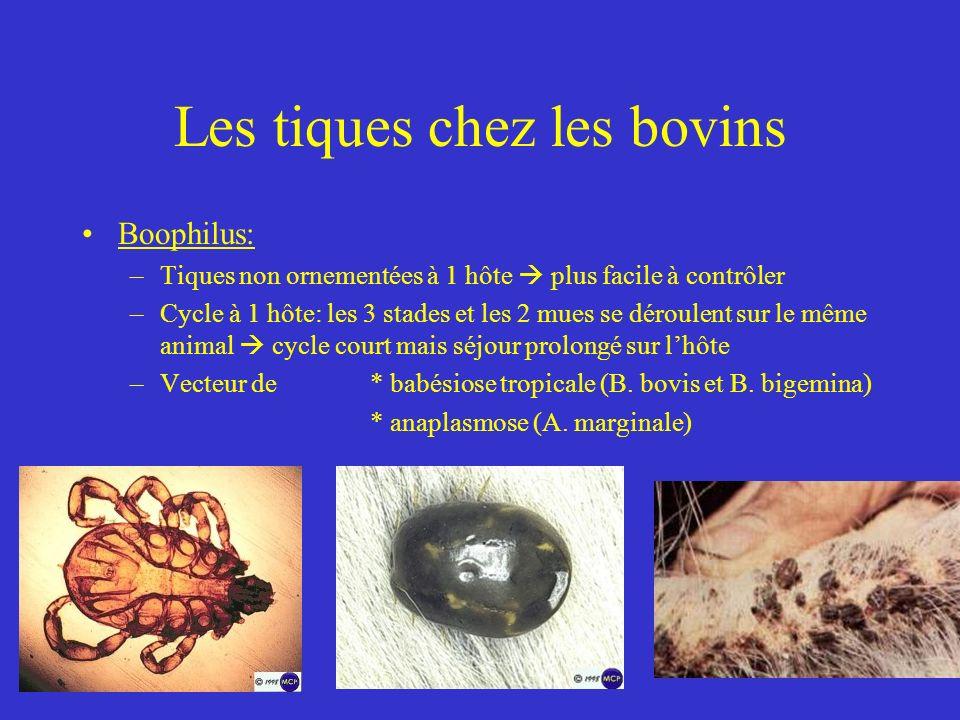 Les tiques chez les bovins Boophilus: –Tiques non ornementées à 1 hôte plus facile à contrôler –Cycle à 1 hôte: les 3 stades et les 2 mues se déroulent sur le même animal cycle court mais séjour prolongé sur lhôte –Vecteur de * babésiose tropicale (B.