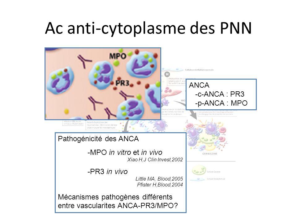 Ac anti-cytoplasme des PNN ANCA -c-ANCA : PR3 -p-ANCA : MPO Pathogénicité des ANCA -MPO in vitro et in vivo Xiao H,J Clin Invest,2002 -PR3 in vivo Lit