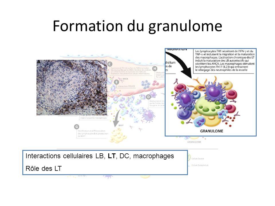 Formation du granulome Interactions cellulaires LB, LT, DC, macrophages Rôle des LT