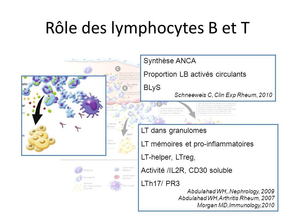 Rôle des lymphocytes B et T Synthèse ANCA Proportion LB activés circulants BLyS Schneeweis C, Clin Exp Rheum, 2010 LT dans granulomes LT mémoires et p
