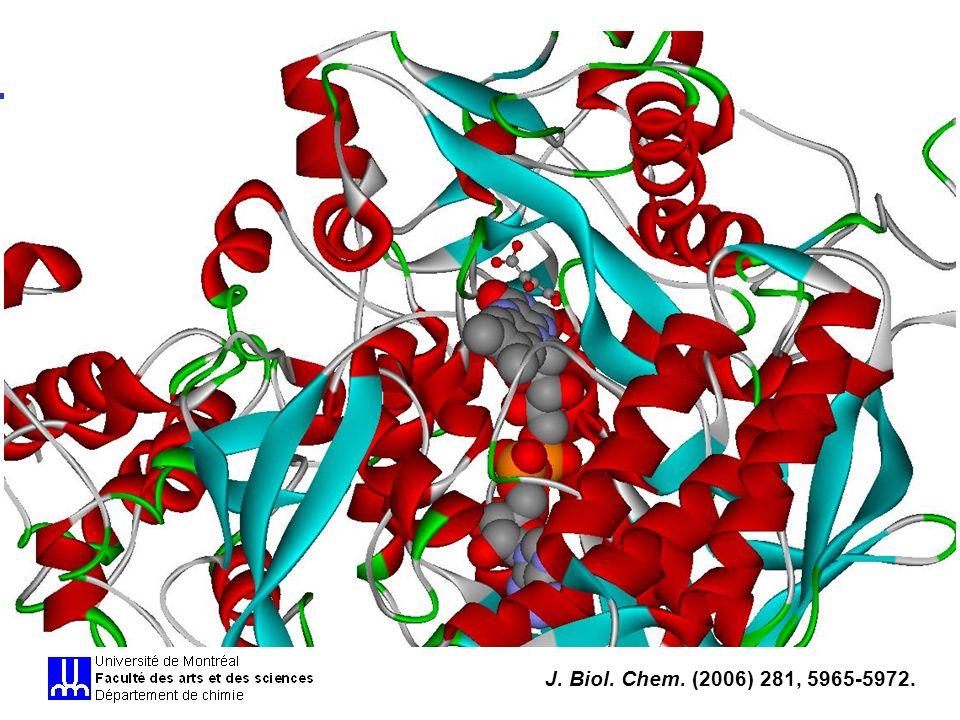 BCM 2504J.W.Keillor - Inhibition enzymatique Équations pour linhibition comp.
