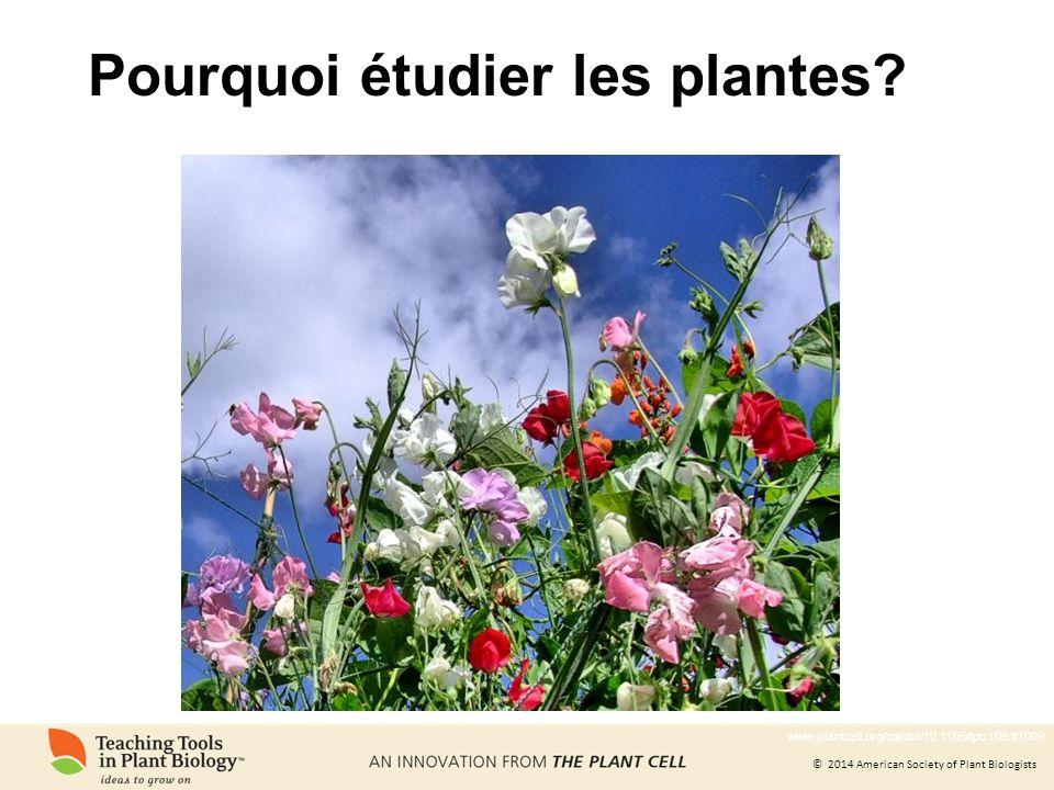 © 2014 American Society of Plant Biologists Nous apprenons sur notre univers à travers létude des plantes Dessin de liège par Robert Hooke, le découvreur de la cellule Les cellules ont été observées pour le première fois chez des plantes.