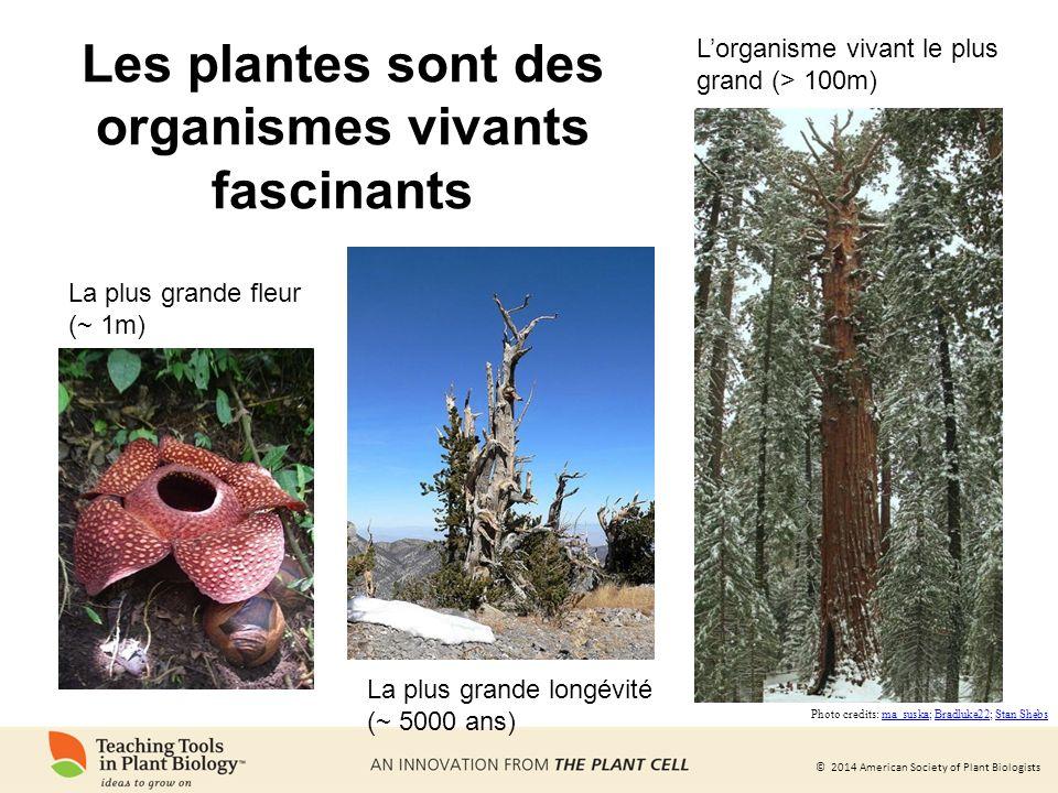 © 2014 American Society of Plant Biologists Nous ne pourrions pas vivre sans les plantes Les plantes produisent la majeure partie de loxygène que nous respirons.