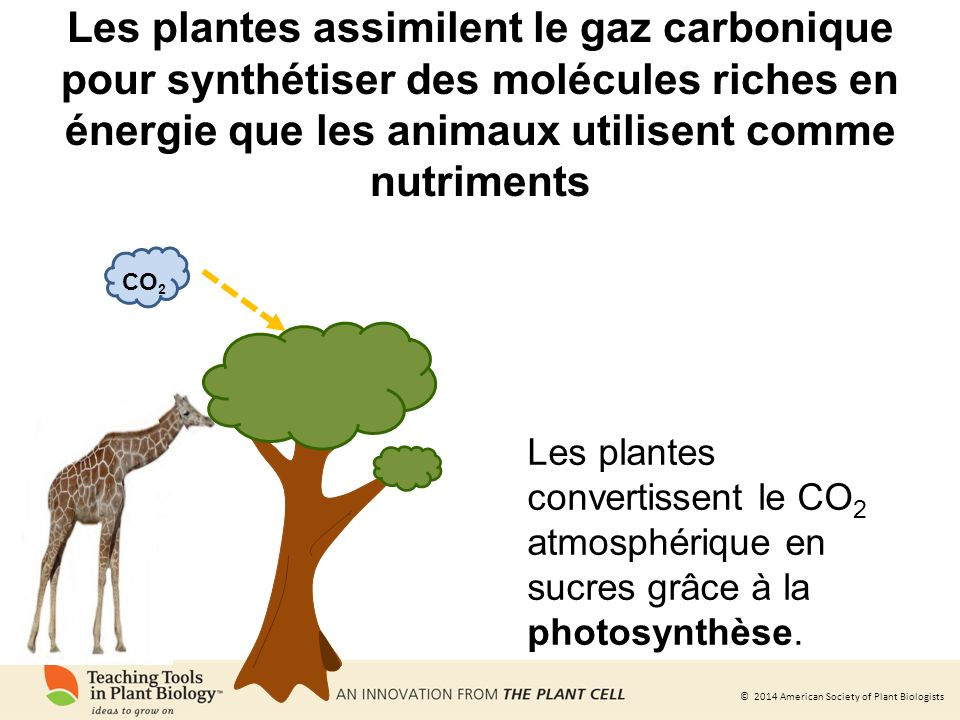 © 2014 American Society of Plant Biologists Les plantes synthétisent des molécules très diverses vitamine A vitamine C vanilline caféine morphine CO 2