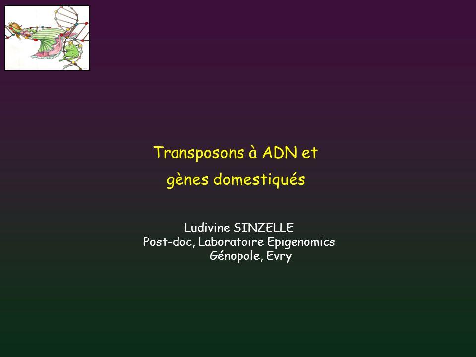 Transposons à ADN et gènes domestiqués Ludivine SINZELLE Post-doc, Laboratoire Epigenomics Génopole, Evry