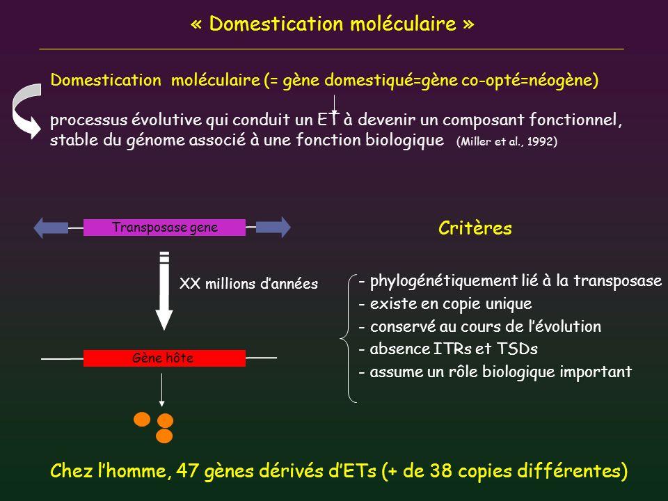 « Domestication moléculaire » Domestication moléculaire (= gène domestiqué=gène co-opté=néogène) processus évolutive qui conduit un ET à devenir un co