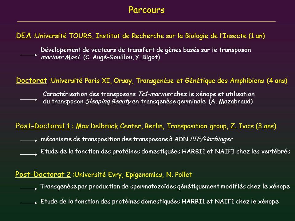 Parcours mécanisme de transposition des transposons à ADN PIF/Harbinger Etude de la fonction des protéines domestiquées HARBI1 et NAIF1 chez les verté