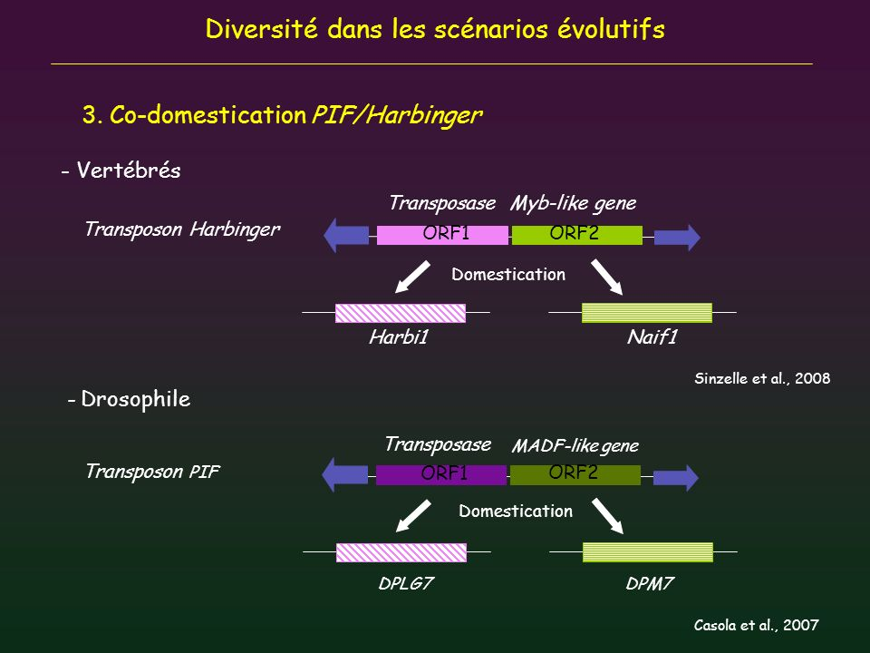 Diversité dans les scénarios évolutifs 3. Co-domestication PIF/Harbinger TransposaseMyb-like gene Harbi1Naif1 MADF-like gene Transposon Harbinger - Ve
