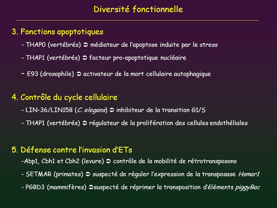 Diversité fonctionnelle 3. Fonctions apoptotiques - THAP0 (vertébrés) médiateur de lapoptose induite par le stress - THAP1 (vertébrés) facteur pro-apo