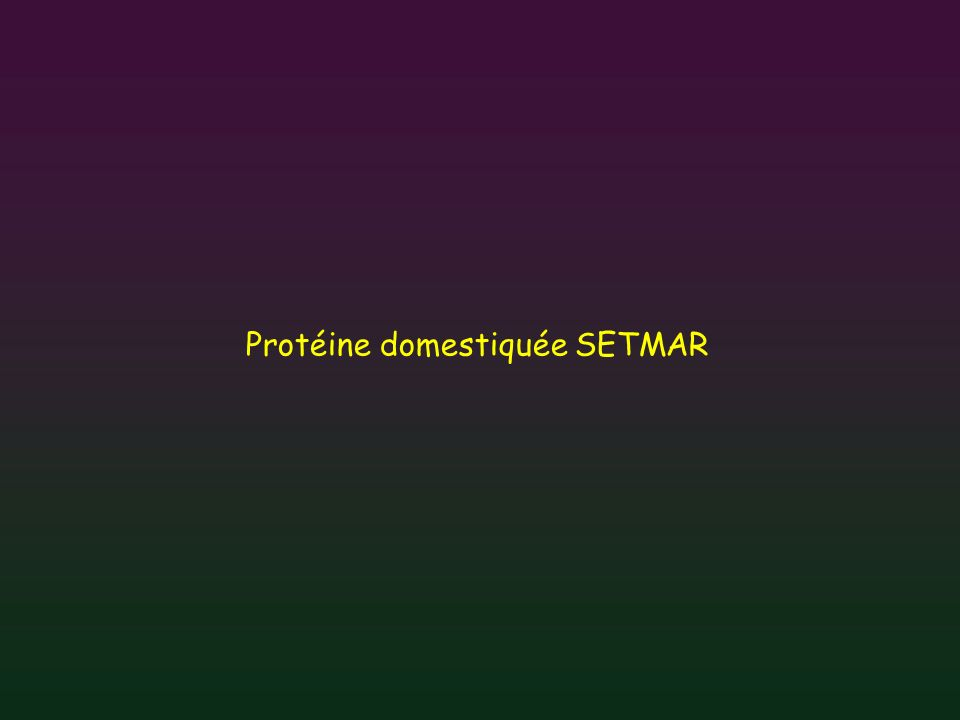 Protéine domestiquée SETMAR