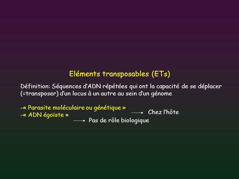 Classification des ETs - 2 classes selon le mécanisme de transposition (Finnegan, 1989) ARN ARN pol RT intégrase transposase ADN génomique Classe I ou rétrotransposon Classe II ou transposon à ADN ADN Transposition copier-coller Transposition couper-coller ET