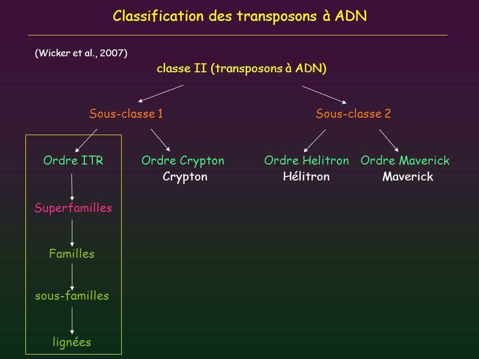 Structure générale des transposons à ADN Transposase gene 2500 bp 50 bp ITR=Inverted Terminal Repeat DBD=DNA binding domain - ZnF - HTH Fixation spécifique des ITRS Nterm- -Cterm NLSDomaine catalytique -DDE/D triade catalytique 5UTR3UTR intron Transposase -Sous-classe I, ordre ITR