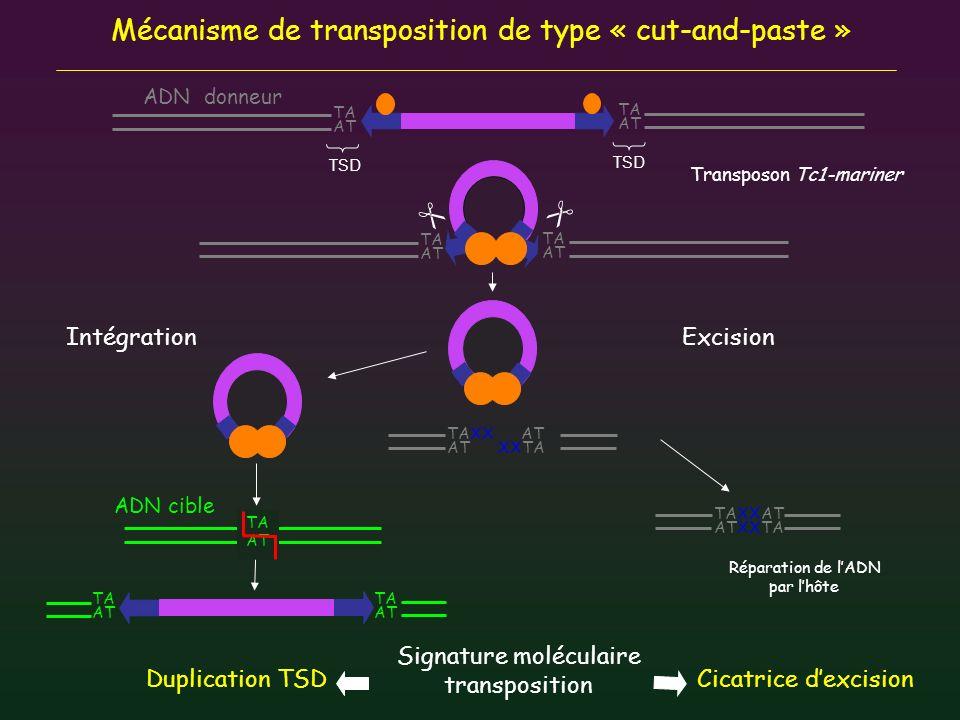 9 Superfamilles de transposons à ADN eucaryotes -Similitude de séquence des transposases -Caractéristiques structurales Longueur et séquence ITRs/TSDs - Nature des domaines fonctionnels DBD (motif HTH ou ZnF) Domaine catalytique Présence dune 2 ORFs pour 2 superfamilles: CACTA et PIF/Harbinger