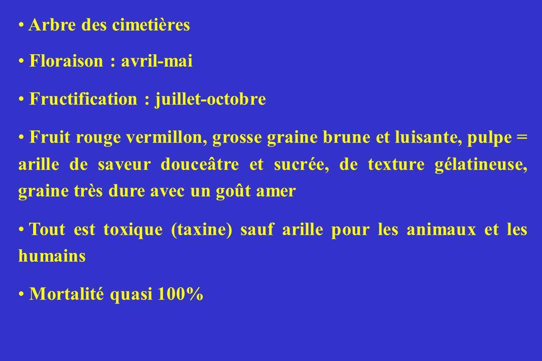 Arbre des cimetières Floraison : avril-mai Fructification : juillet-octobre Fruit rouge vermillon, grosse graine brune et luisante, pulpe = arille de